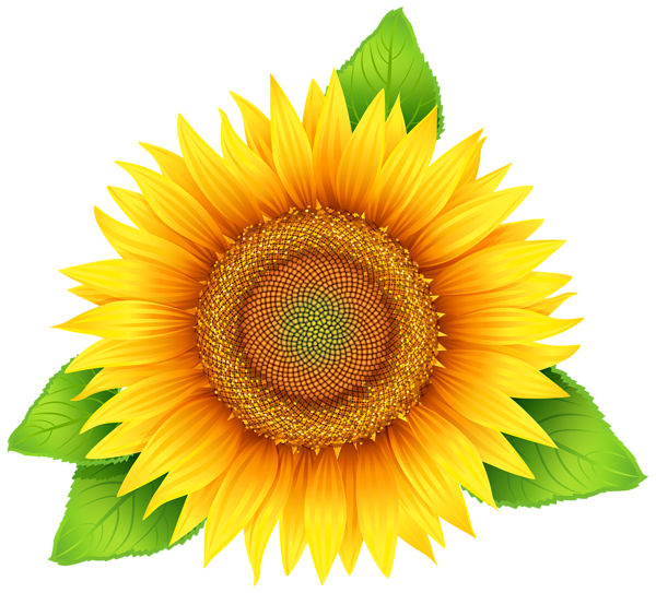 600x543 Collection Of Free Sunflower Vector Pattern. Download On Ubisafe
