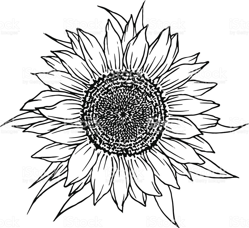 1024x936 Sunflower Vector Clipart Free