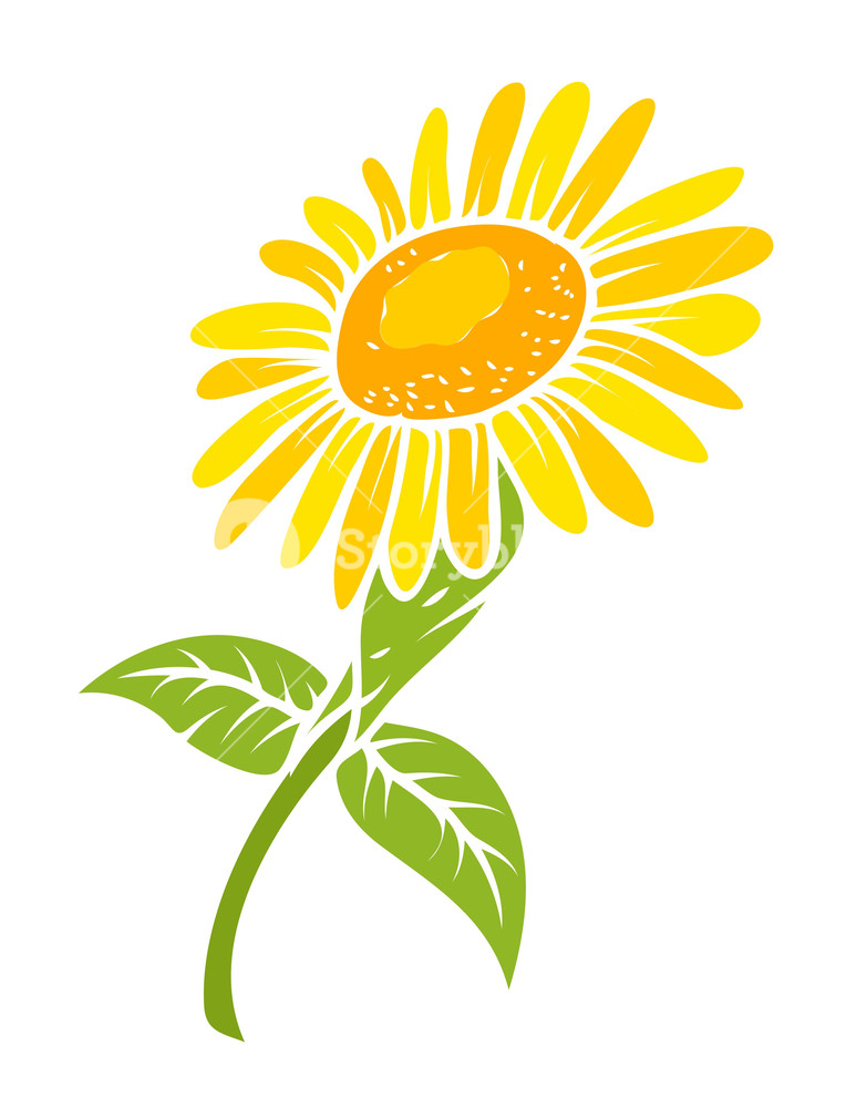 764x1000 Sunflower Vector Design Royalty Free Stock Image