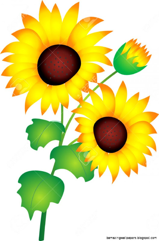 527x800 Sunflower Vector Illustration Amazing Wallpapers