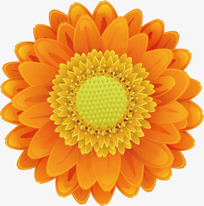 650x656 Cartoon Sunflower Vector, Sunflower Clipart, Sun Flower, Cartoon