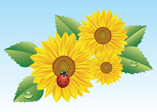 600x429 Sunflower Flower Vector Material My Free Photoshop World