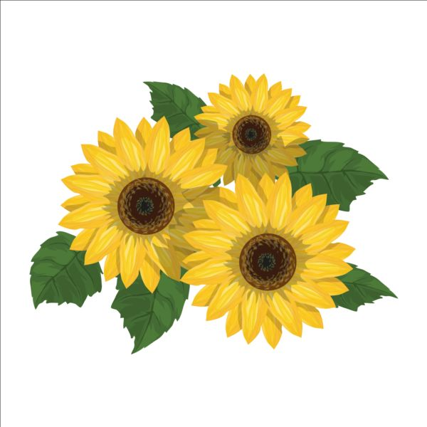 600x600 Sunflower With Green Leaves Vector Free Download