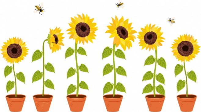 658x368 Vector Drawing Sunflower Free Vector Download (90,594 Free Vector