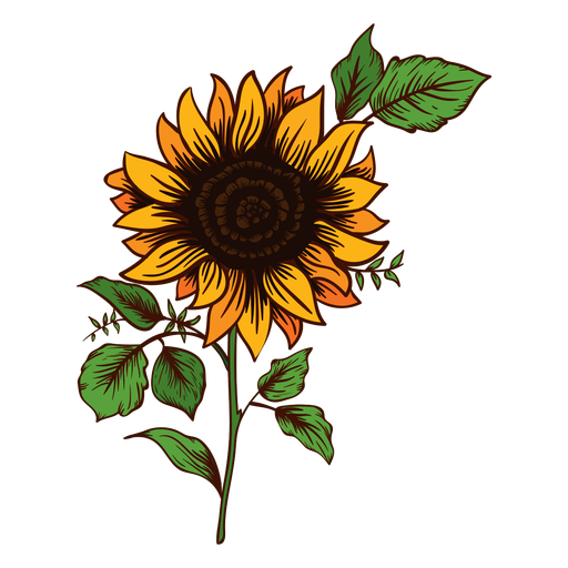 512x512 Collection Of Free Sunflower Vector Watercolor. Download On Ubisafe