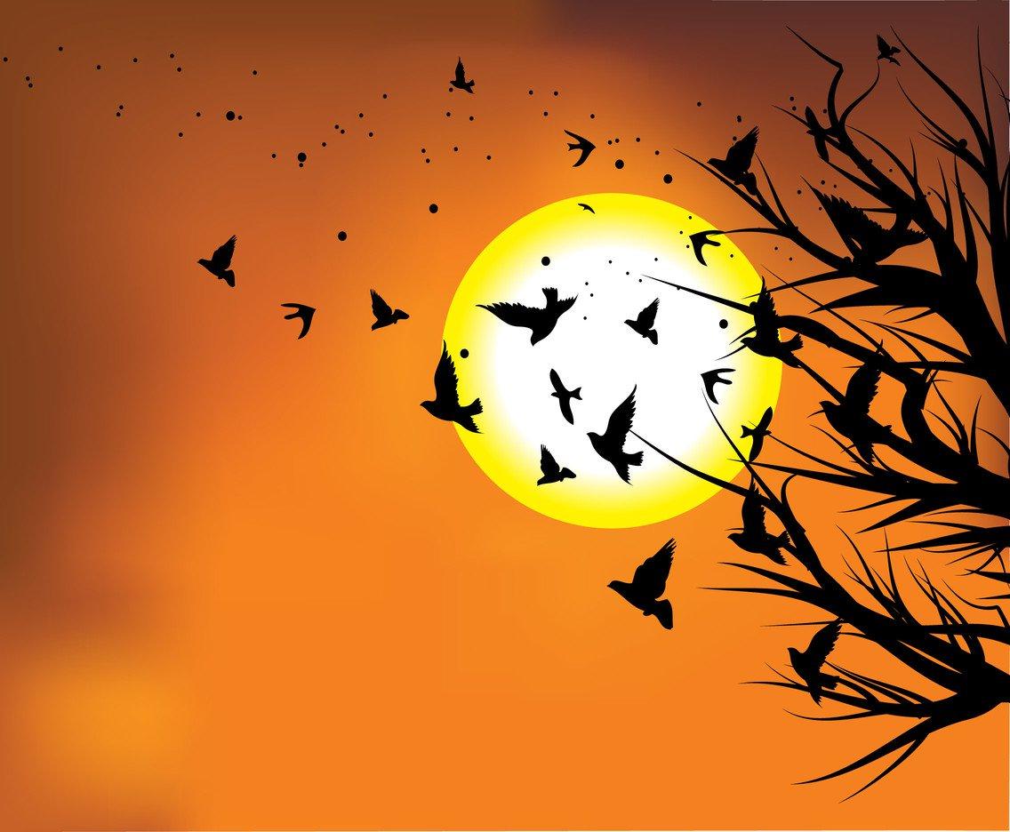 1136x936 Flock Of Birds In Sunset Vector Vector Art Amp Graphics