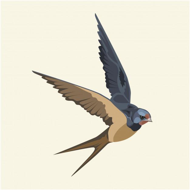 626x626 Swallow (Bird) In Flight Vector Premium Download