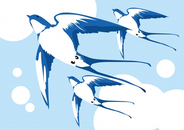 626x442 Swallow Vectors, Photos And Psd Files Free Download
