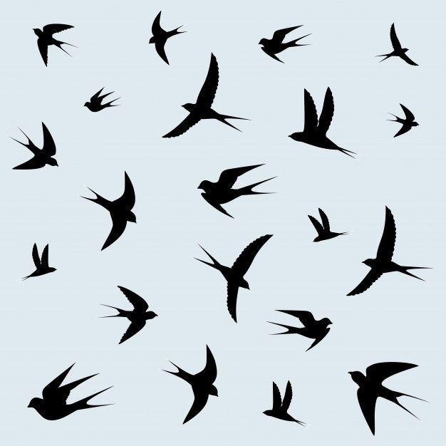 626x626 Swallow Bird Vectors, Photos And Psd Files Free Download