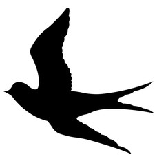 228x240 Swallow Photos, Royalty Free Images, Graphics, Vectors Amp Videos