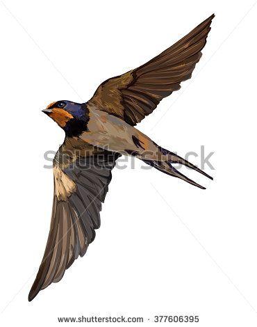 370x470 Swallow Vector, Vector Illustration Isolated Bird. Bird Flying