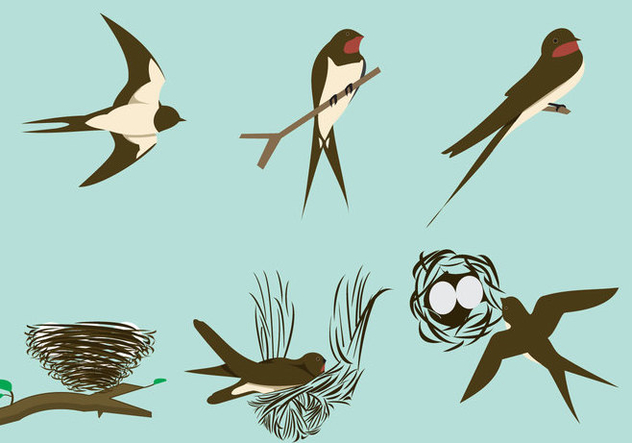 632x443 Swallows And The Nests Free Vector Download 333839 Cannypic