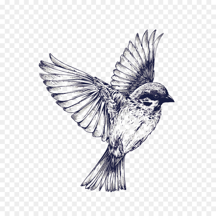 900x900 Bird Flight Tattoo Drawing Swallow