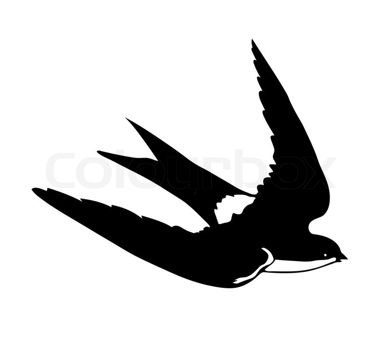 800x696 Vector Silhouette Flying Swallows On White Background Stock