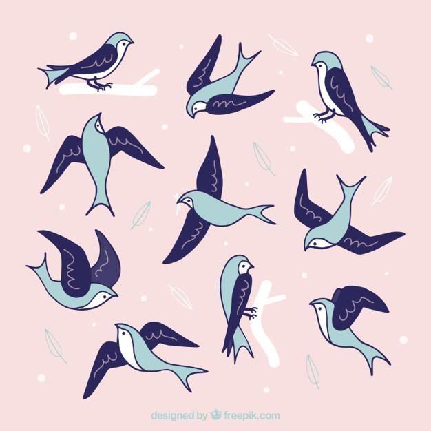 626x626 Drawn Swallow Vector 6