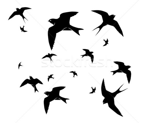 600x480 Flying Swallows Vector Illustration Yura Mayboroda (Mayboro