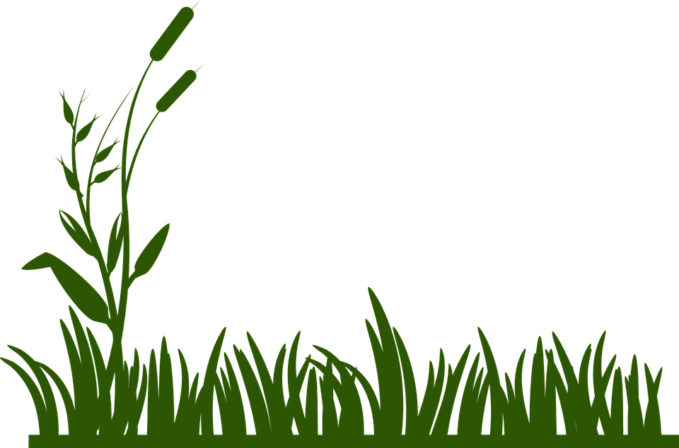 Swamp Vector
