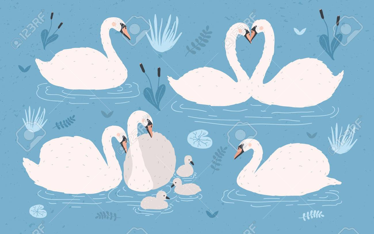 1300x812 Drawn Swan Vector