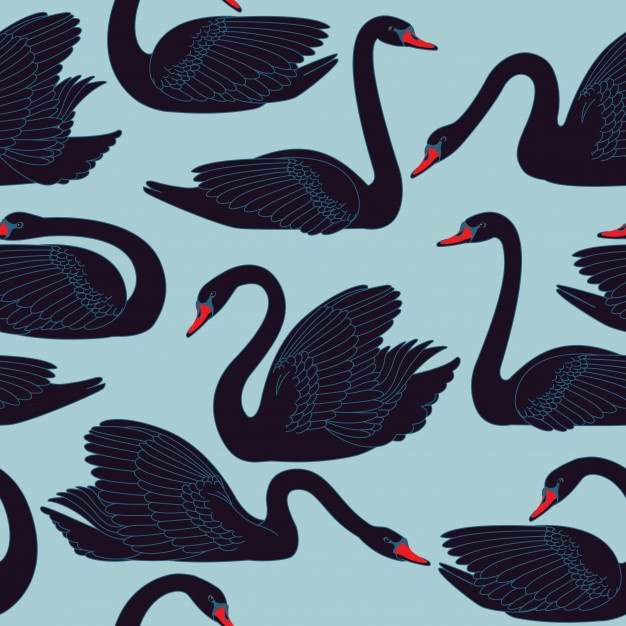 626x626 Swan Vectors, Photos And Psd Files Free Download