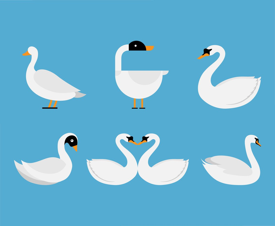 1136x936 White Swan Vector Set Vector Art Amp Graphics