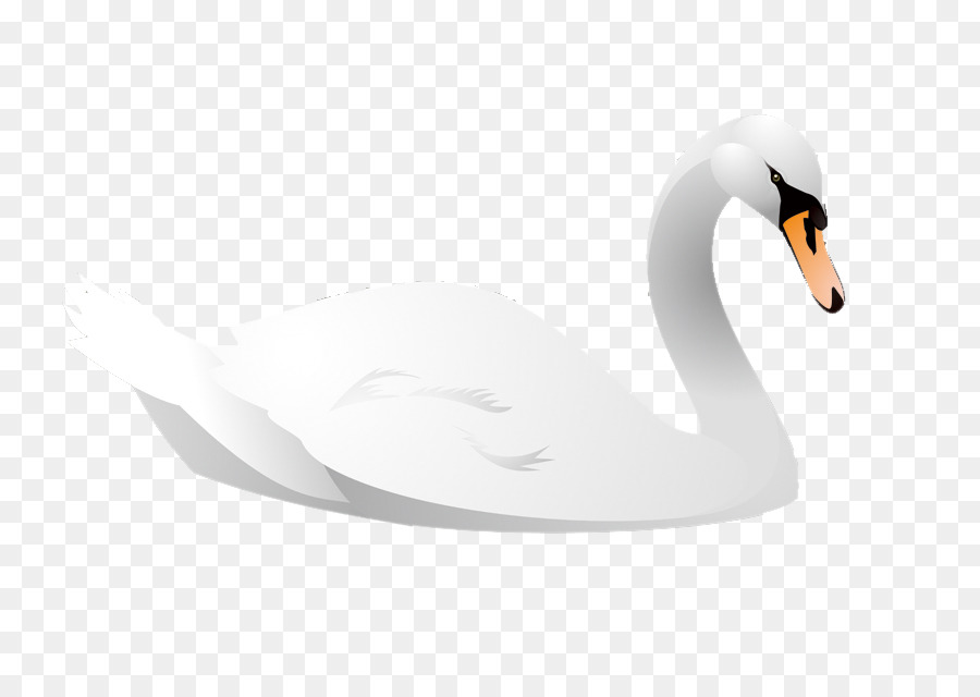 900x640 Download Cygnini Bird Cartoon Animal Illustration Cartoon Swan
