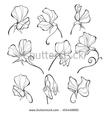 450x470 Sweet Peas. Vector Floral Set. Flowers Isolated On White