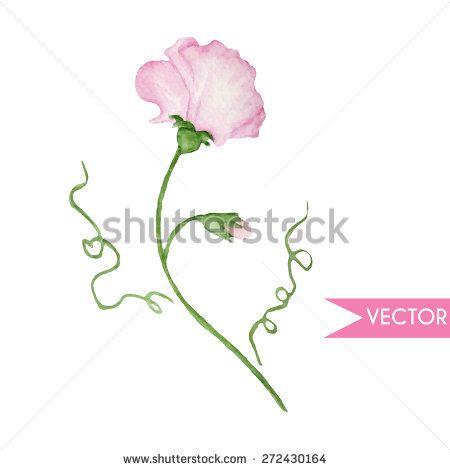 450x470 Vector Cute Watercolor Pink Sweet Peas. Sweet Pey