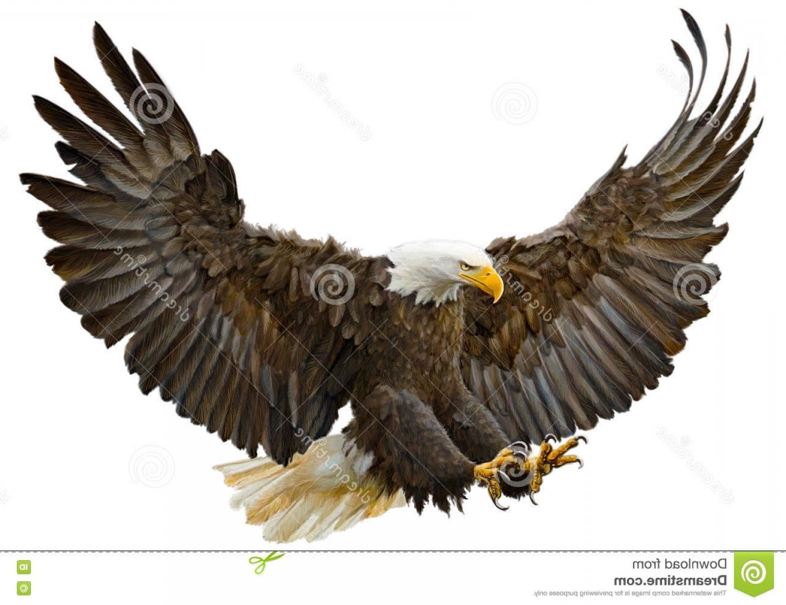 1560x1200 Stock Illustration Bald Eagle Swoop Landing Vector Hand Draw White