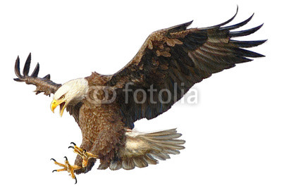 400x267 Bald Eagle Swoop Attack Head Draw And Paint Vector Illustration