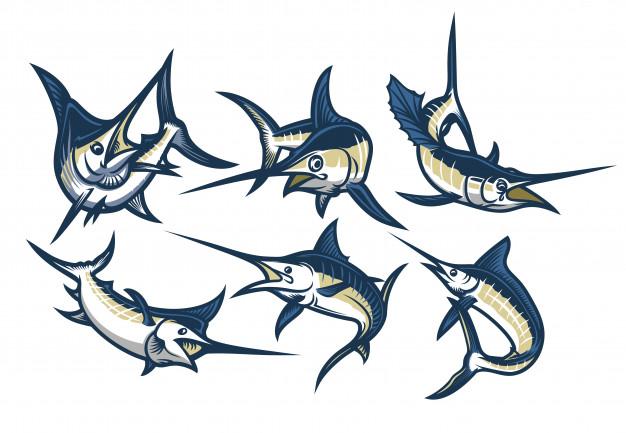 626x433 Set Of Swordfish Vector Premium Download