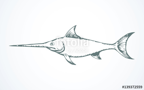 500x314 Swordfish. Vector Drawing Stock Image And Royalty Free Vector