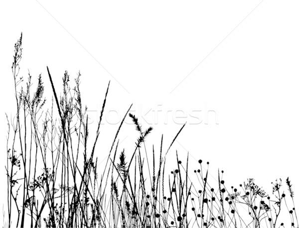 Tall Grass Vector