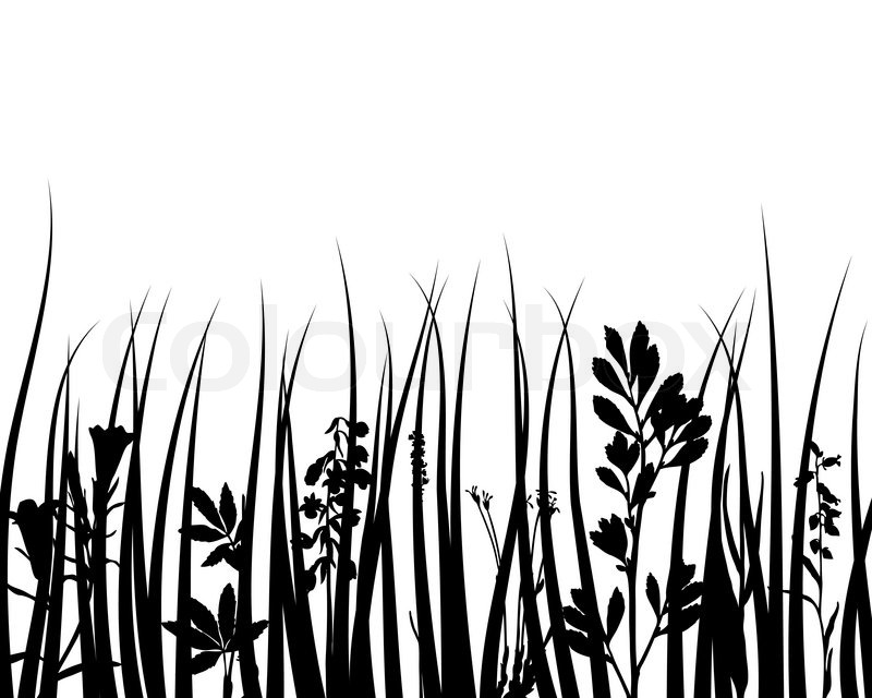 800x640 Grass Silhouettes Ornate On The White Background Stock Vector