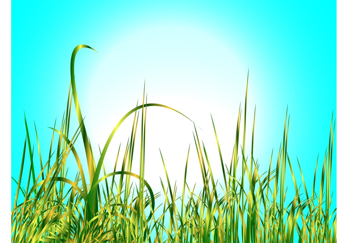 1400x980 Natural Vector Footage Of A Group Of Very Tall Grass Stems. Bright