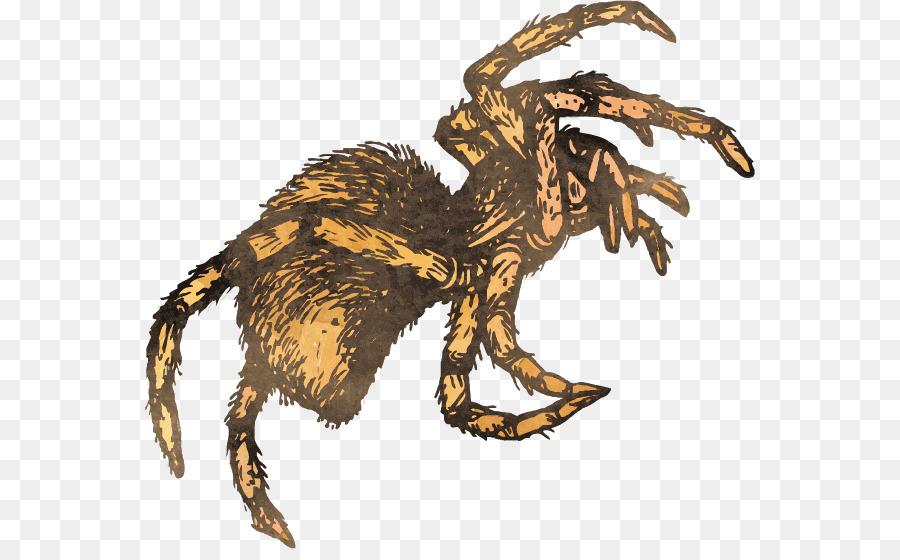 900x560 Spider Velociraptor Insect Tarantula