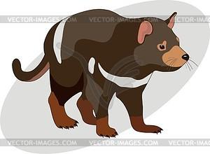 300x220 Sarcophilus Harrisii (Tasmanian Devil)