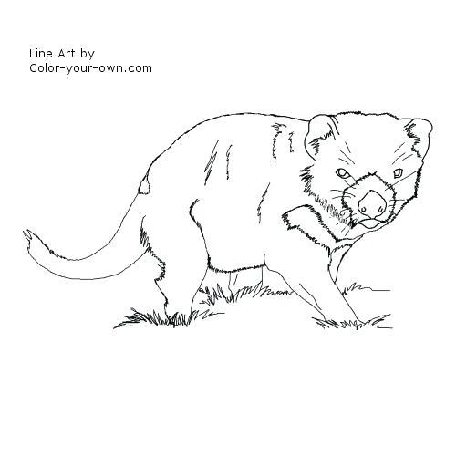 500x500 Tasmanian Devil Coloring Pages Devil Cartoon Coloring