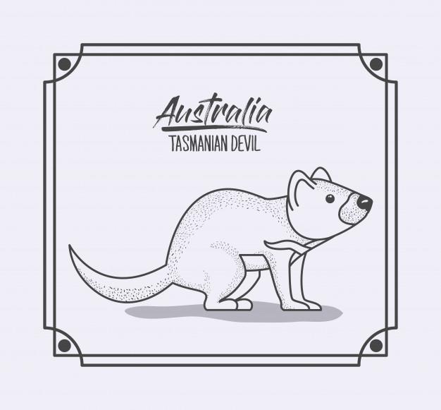 626x581 Australia Tasmanian Devil In Frame And Monochrome Silhouette