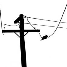 220x220 Bird On A Wire Telephone Pole Vector 2.jpg Broughton Spurtle