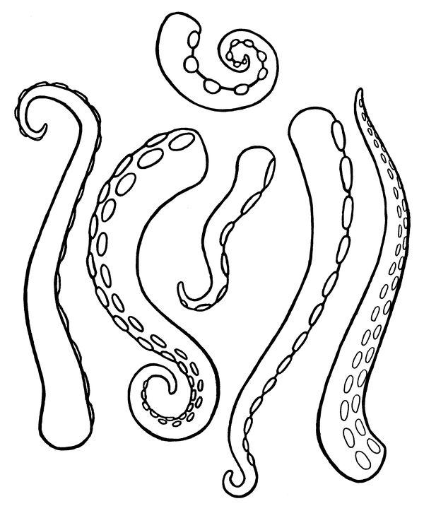 600x716 Drawn Tentacle Octopus Tentacle