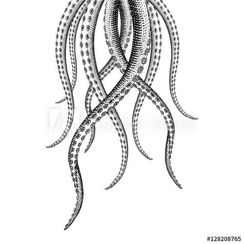 500x500 Tentacle Illustrations