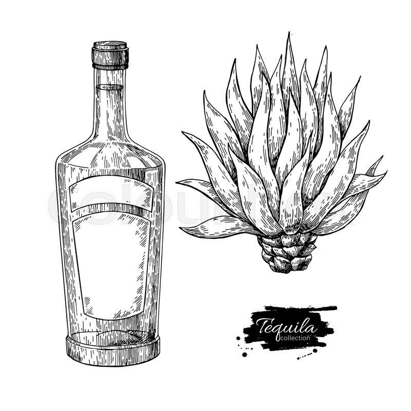 800x800 Tequila Bottle With Blue Agave. Mexican Alcohol Drink Vector