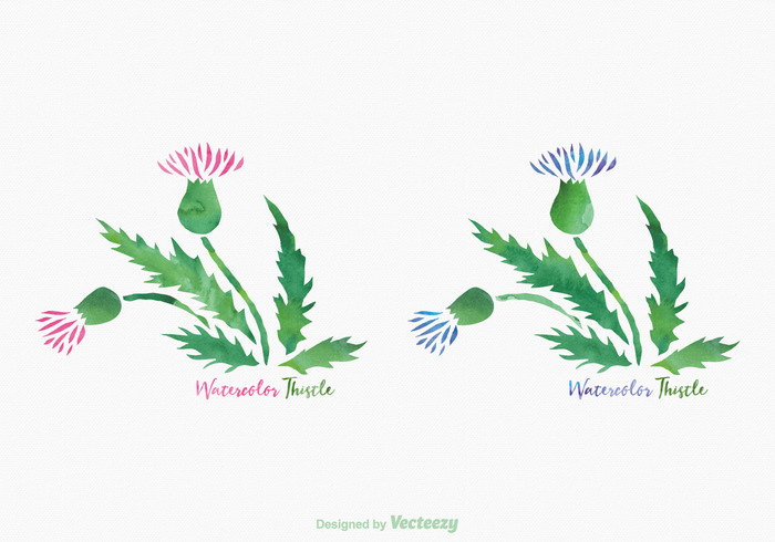 700x490 Free Thistle Watercolor Vector