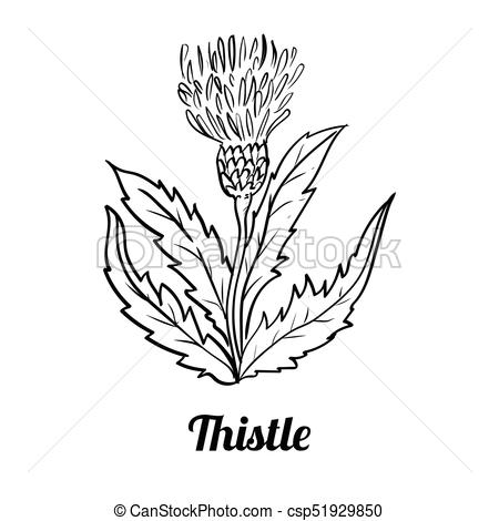 450x470 Hand Drawn Thistle Flower Vector Illustration. Hand Drawing Of