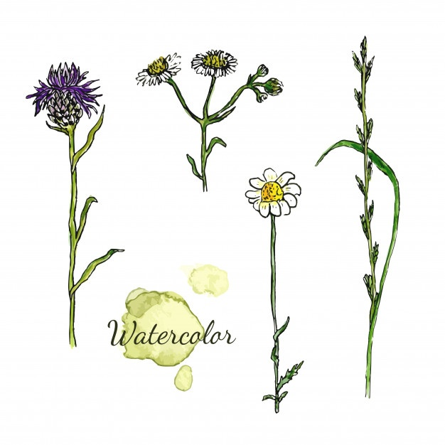 626x626 Thistle Vectors, Photos And Psd Files Free Download
