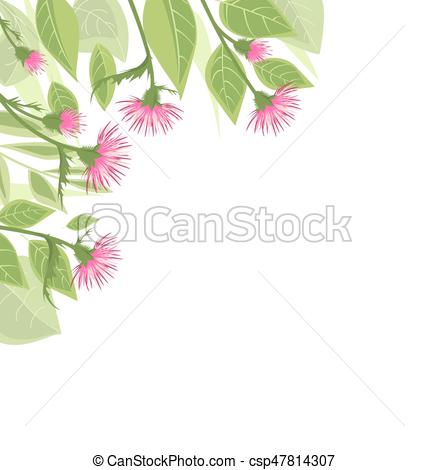 429x470 Thistle With Green Leaves. Vector Illustration Thistle With Green