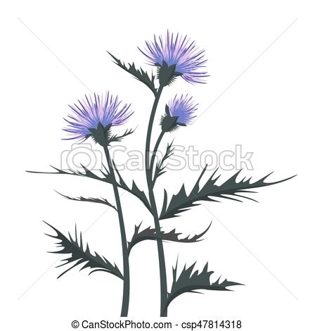 448x470 Thistle With Leaves. Vector Illustration Thistle With Leaves On A