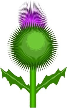 228x368 Vector Thistle Free Vector Download (6 Free Vector) For Commercial