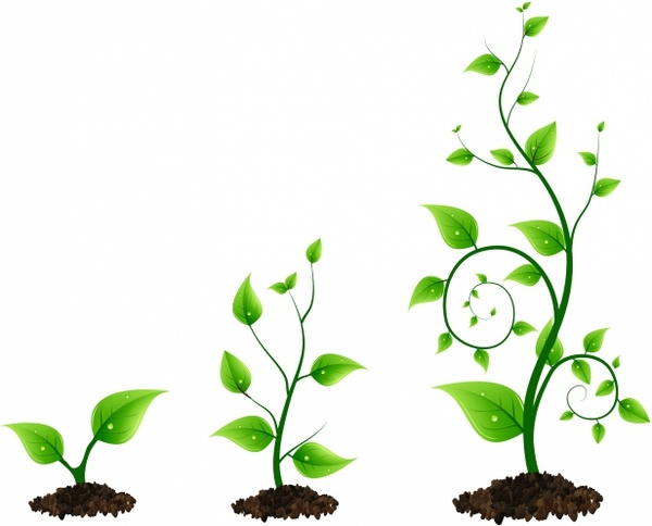 600x484 Three Green Plant Growth Cycle Free Vector In Adobe Illustrator Ai