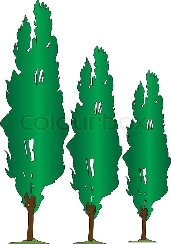 561x800 Three Poplars